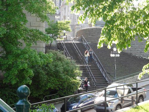 Steps-trees